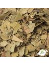 Arbousier - feuilles en vrac - détail